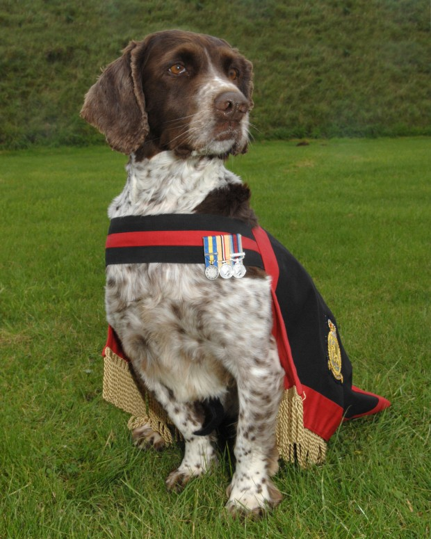 Date:- 13 Oct 2010 WAD-10-0950. Sgt Barrow of the Royal Air Force Police Dog Section at RAF Waddington with Buster the RAFP sniffer dog who is about to become a mascot for the RAFP dog units. For further information contact: Royal Air Force Waddington Media Communications Officer, RAF Waddington MCO Waddington Lincolnshire LN5 9NB Tel 01522 726804