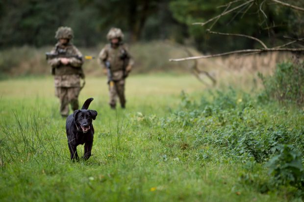 Reserve and Regular Military Working Dog Squadrons Exercise together in Germany. Members of the Reserve's, 101 Military Working Dog Squadron (101 MWD Sqn), along with their Regular colleagues from 102 Military Working Dog Squadron, 1st Military Working Dog Regiment (1 MWD Regt) have today completed their final training task together in Germany. Exercise CHIRON ALLIANCE, where members from across the Regiment came together to test their military skills, was a Squadron level exercise to test the units infantry and soldiering skills as well as their dog handling skills in a testing environment, both for themselves and their animals. Photographer; Mr Dominic King Army Press Office Germany