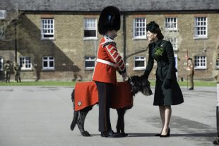 The Regimental Mascot of the Irish Guards, an Irish Wolfhound named Domnhall, is presented to the Duchess of Cambridge.